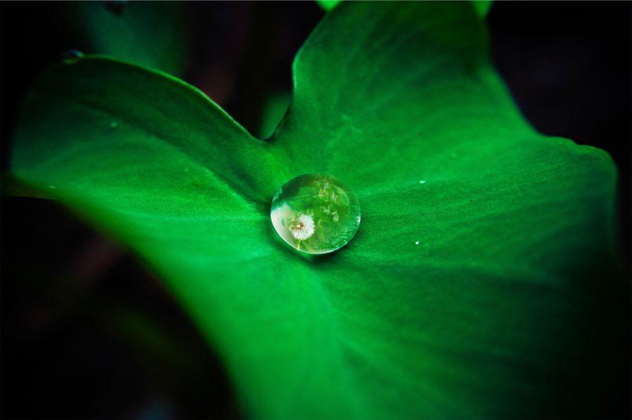 Jakość wody w procesie produkcji kosmetyków