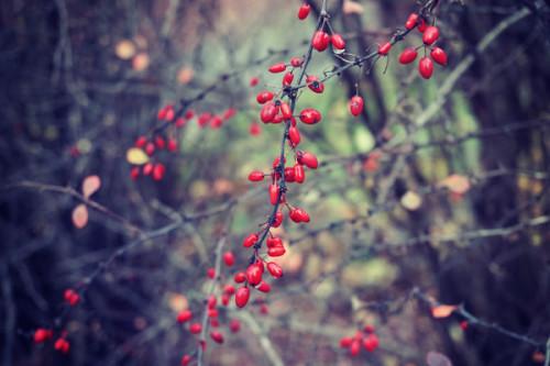 Jesień, krzewy