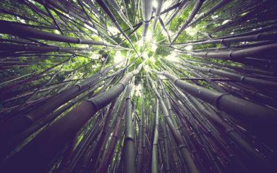 Bambus i jego niezwykła moc!