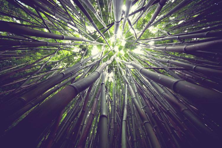 Bambus i jego niezwykła moc - Surowce i szczypta chemii - Blog BANDI