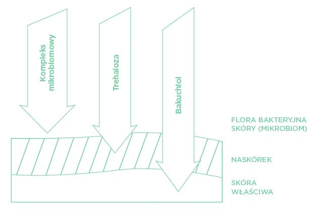 Wielokierunkowe działanie na skórę skłądników aktywnych ekoceutyków linii EcoFriendly Care.
