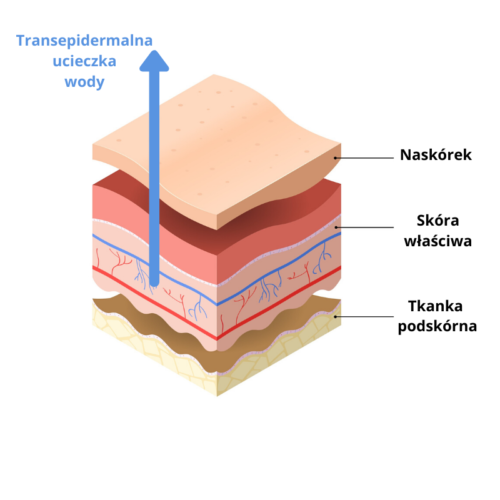 Ektoina chroni skórę przed transepidermalną ucieczką wody