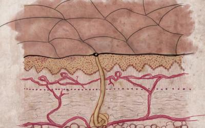 Warstwa lipidowa naskórka – naturalna bariera ochronna